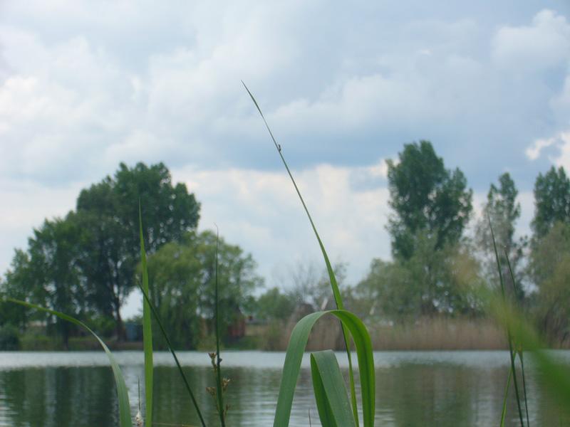 II-es tó